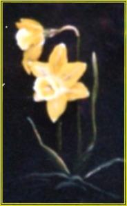 Daffodil Flwr2Pge13