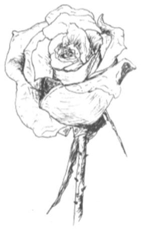 Rose PenInk