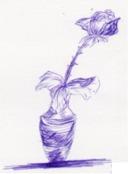 Rose in Pot Sketch